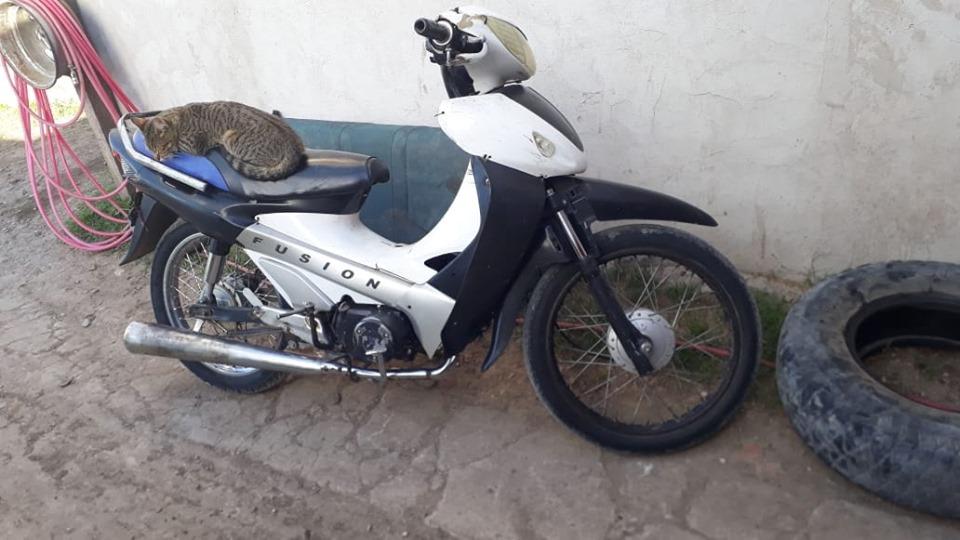 Motomel 110 2010